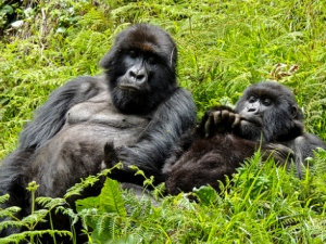Where is the Best to Trek and see Gorillas 2017-2018