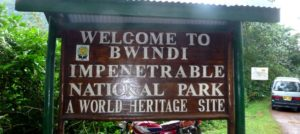 Gorilla Tracking Buhoma Section Bwindi Impenetrable National Park