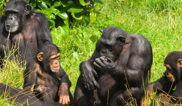 Know the region/sector you will be trekking gorillas in Uganda