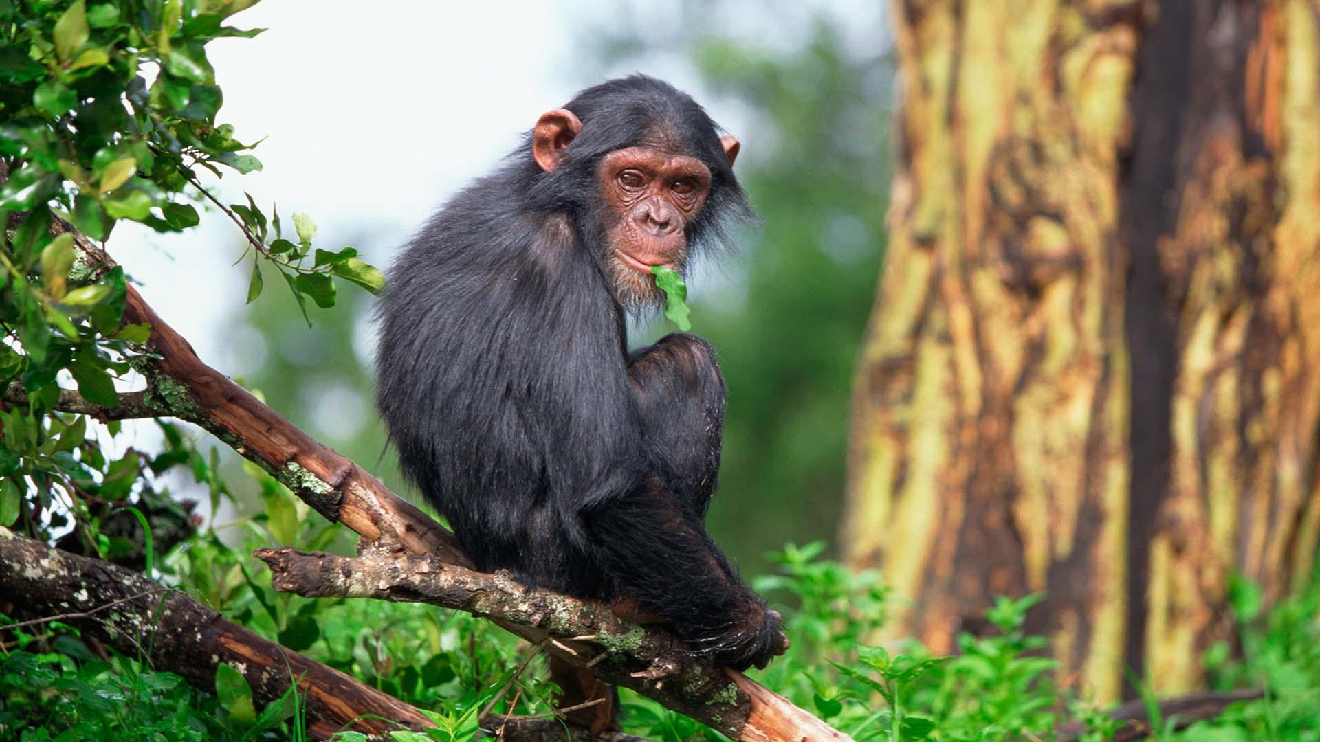 10 DAYS UGANDA PRIMATES & WILDLIFE SAFAR