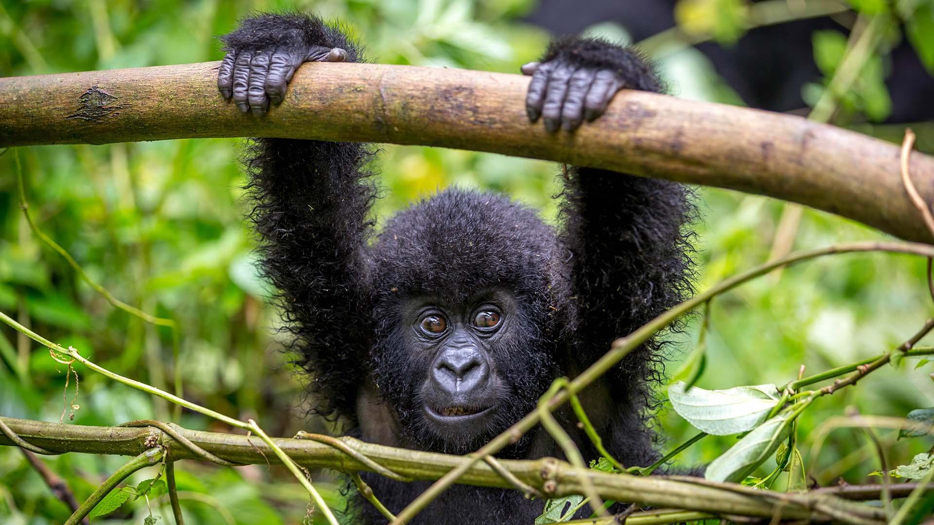3 Days Rwanda Gorilla tracking tour