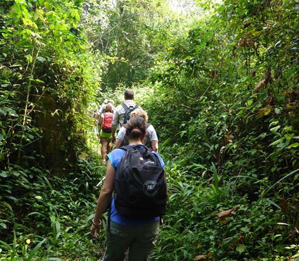 2017-2018 Gorilla Habituation Experience Rushaga-Bwindi Gorillas-Uganda