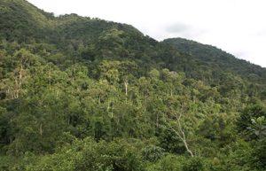 Visit Mghinga Gorilla Virunga Volcanoes Bwindi Impenetrable Forest