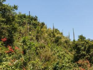 Visit Mghinga Gorilla Virunga Volcanoes Bwindi Impenetrable-Forest