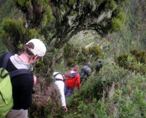 Visit Mghinga Gorilla-Virunga Volcanoes Bwindi Impenetrable Forest
